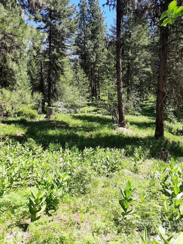 Listing photo 1 for TBD Campbell Rd