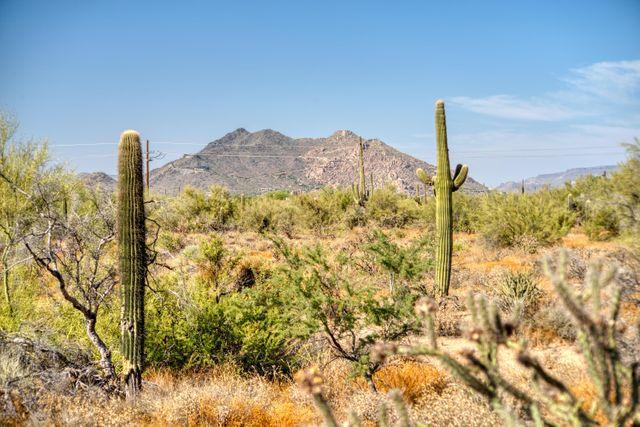 7100 E Rancho Del Oro Dr E -, Scottsdale, 85266, AZ - photo 0